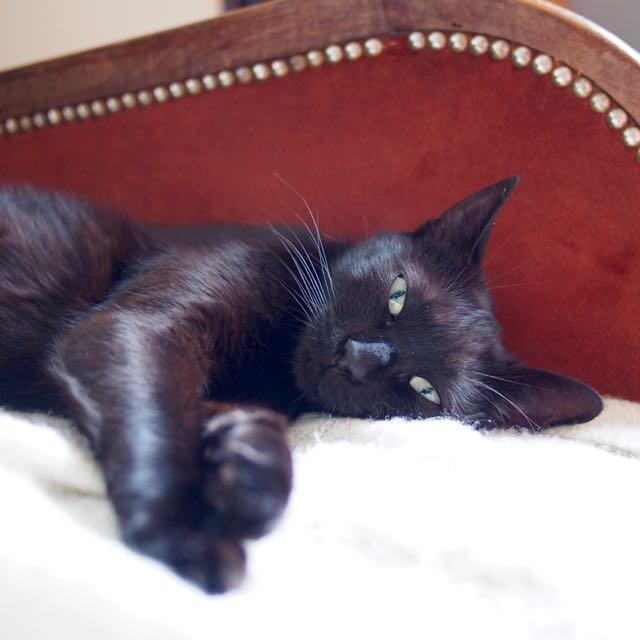 Jenga, femelle type européenne noire estimée née 15/10/2014 - Page 2 P7012315