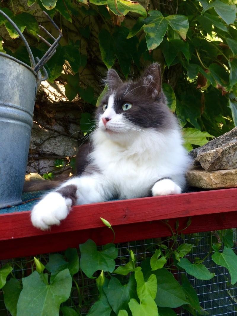Poules et chats Image39