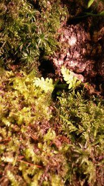 Infos sur terrarium pour Tribolonotus gracilis - Page 2 11652011
