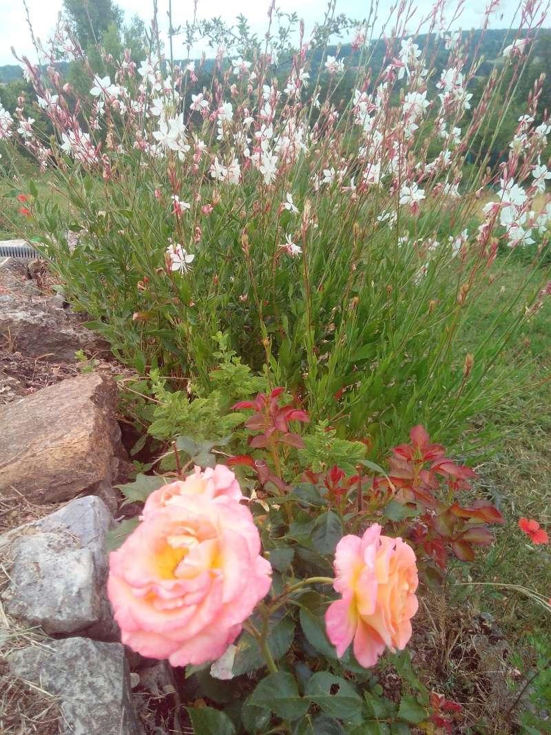 Les plantes dans notre maison et à l'extérieur - Page 3 Img_2014