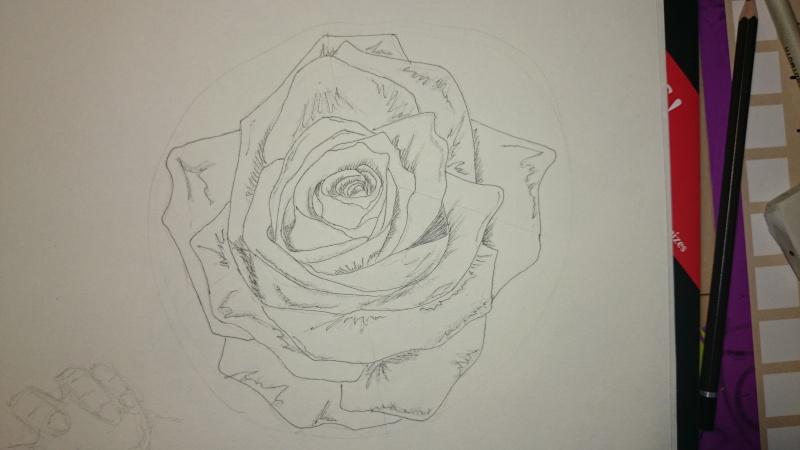 La vie d'une rose... Dsc_0219