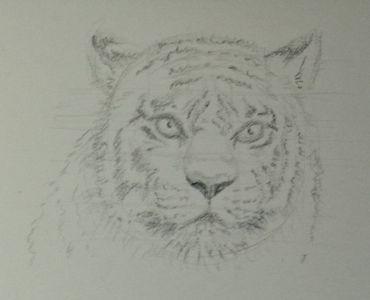 Etude: têtes de tigre Dsc_0221