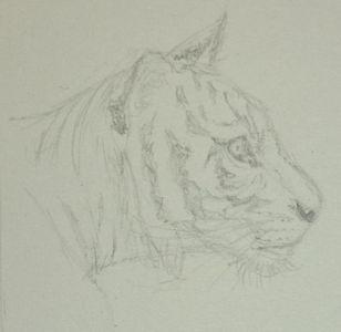 Etude: têtes de tigre Dsc_0222