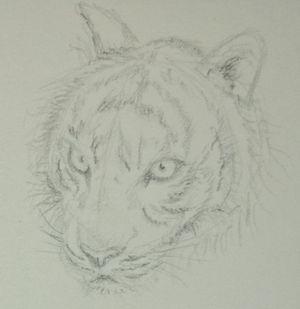 Etude: têtes de tigre Dsc_0223