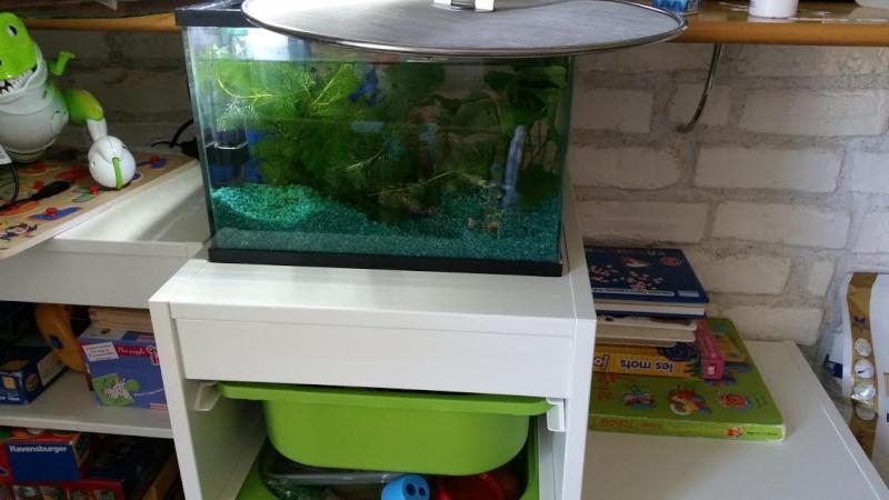 Petits conseils sur aménagement aquarium Unname10