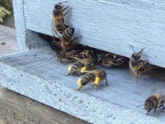 partition ou pas? Bees10