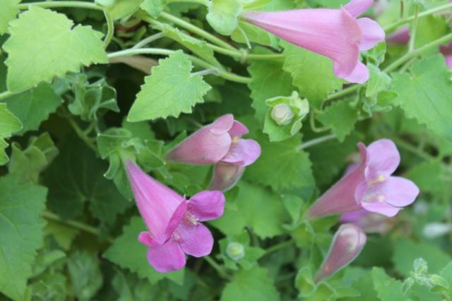 Floraisons du mois d'Août - Page 10 Img_3318