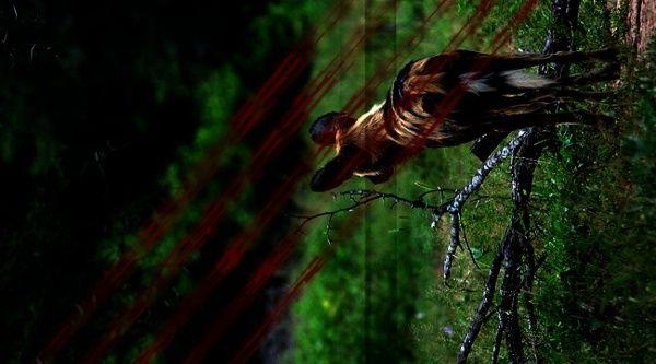 Amaëal Lïibëen - Discretion Imagin11