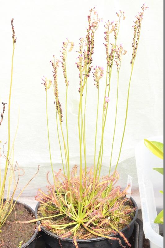 Plantes Phyliok  Img_3713