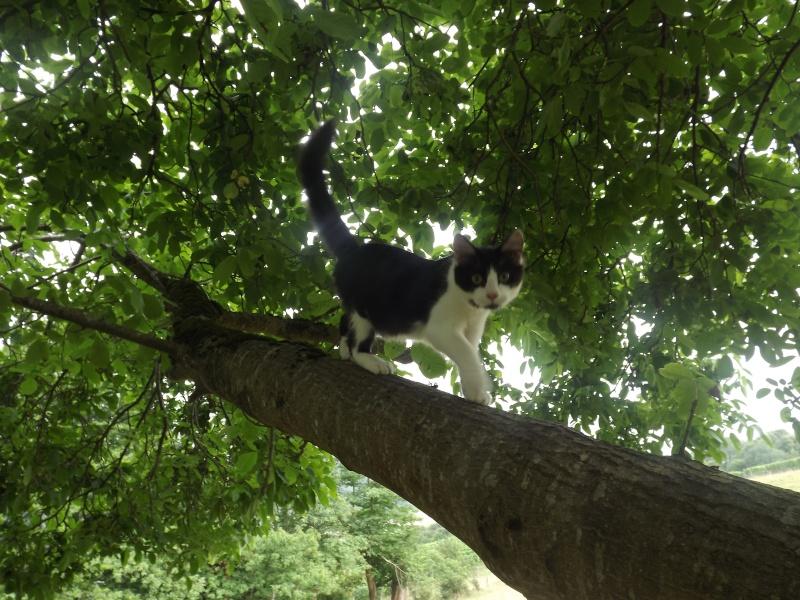 Guismo, chaton noir et blanc poils mi longs 2 mois IE n° 250269810587402 Dscf3110
