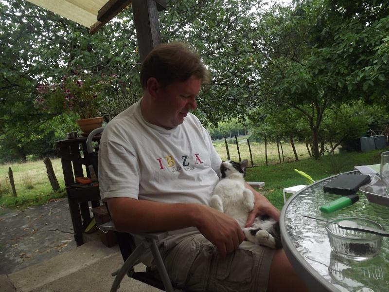 Guismo, chaton noir et blanc poils mi longs 2 mois IE n° 250269810587402 Dscf3114