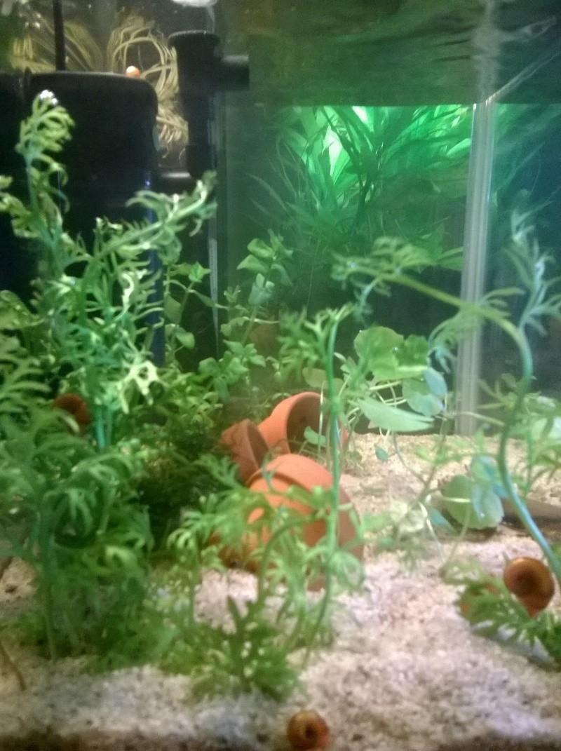 Help ! Crevettes vont mal Coty_g10