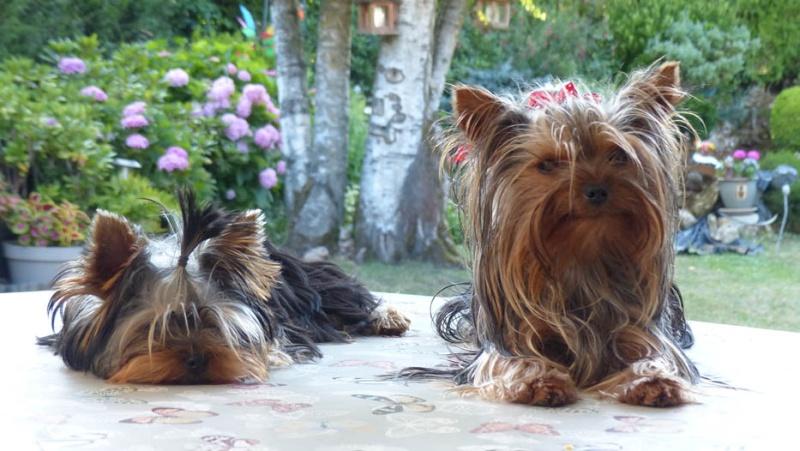 Mes deux petites chiennes au Maroc  P1190613