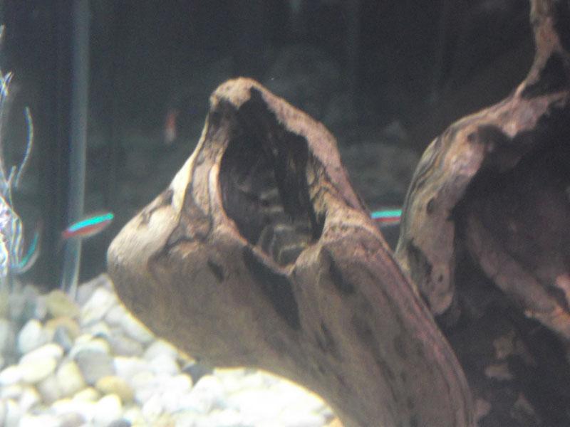 Betta Help! Fish212