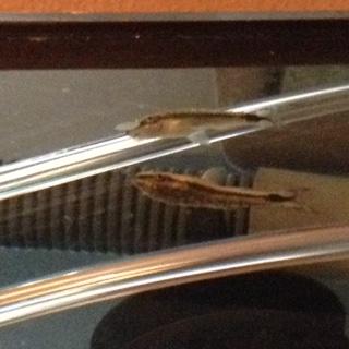 Betta Help! Fish310