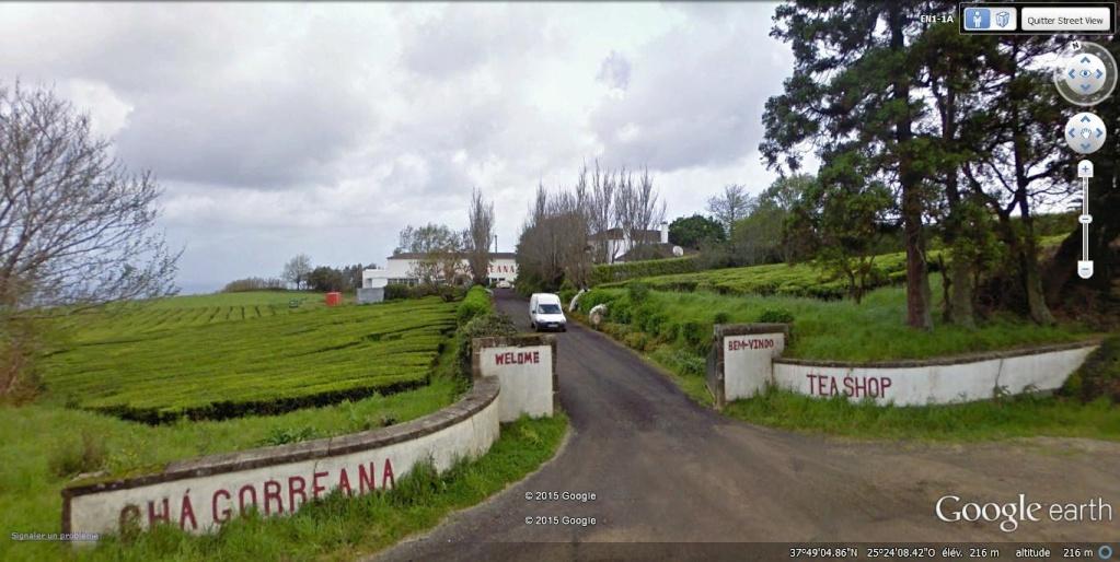 Exploitation de thé sur l'île São Miguel des Açores au Portugal.  Thy_vu11
