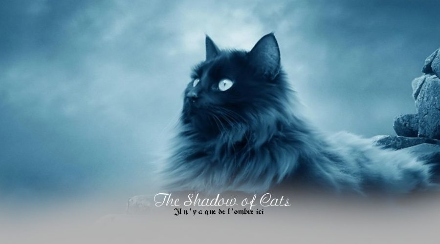 The Shadow Of Cats