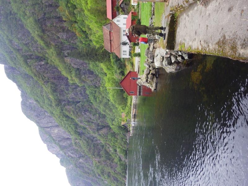 Saumons Norvégiens Rimg0214