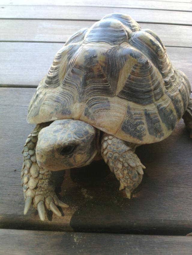 Ma tortue ne sort plus et ne mange presque pas  Img_2012