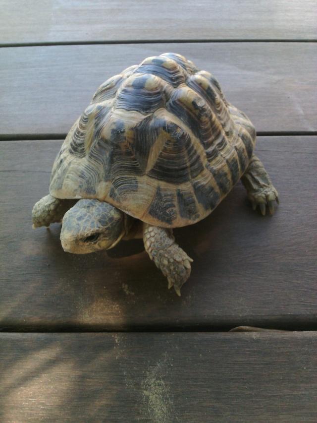 Ma tortue ne sort plus et ne mange presque pas  Img_2013