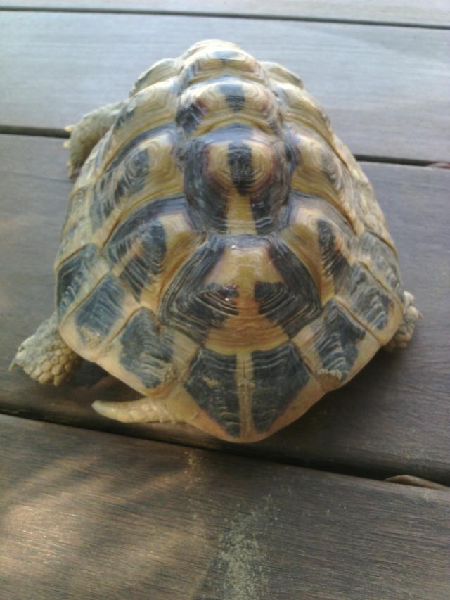 Ma tortue ne sort plus et ne mange presque pas  Img_2014