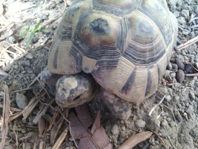 Ma tortue ne sort plus et ne mange presque pas  Img_2017