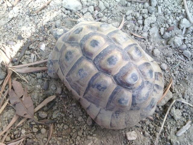Ma tortue ne sort plus et ne mange presque pas  Img_2018