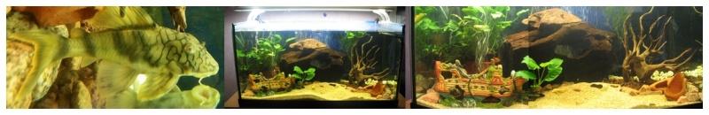 Le nom de ce poisson de fond ?  Aqua10
