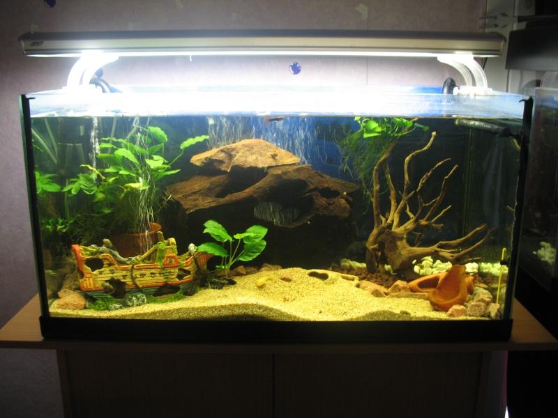 300 L poissons de fond ancistrus - Page 2 Photo_10