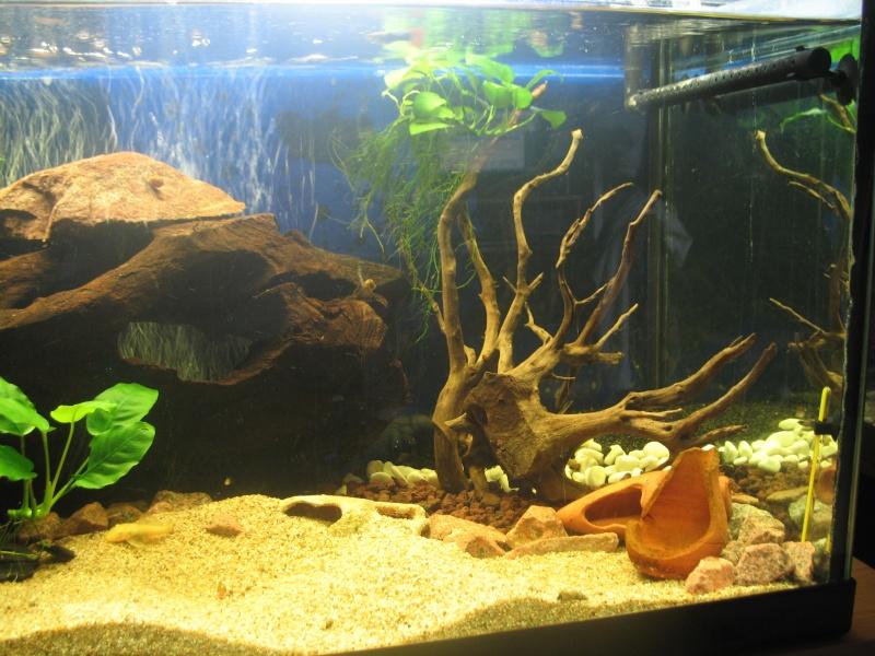 300 L poissons de fond ancistrus - Page 2 Photo_12