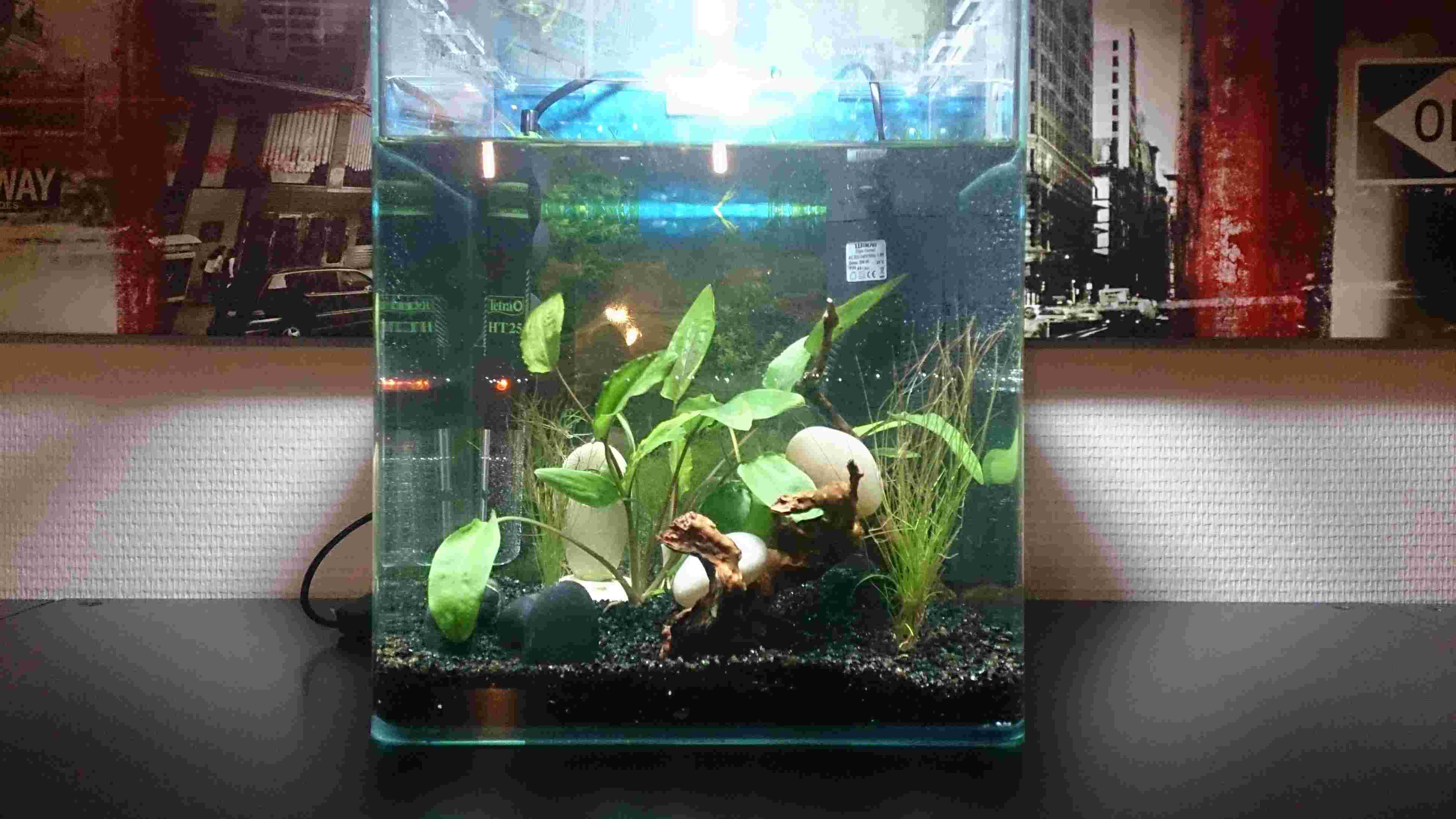 nouvel aquarium pour futur betta Dsc_0310