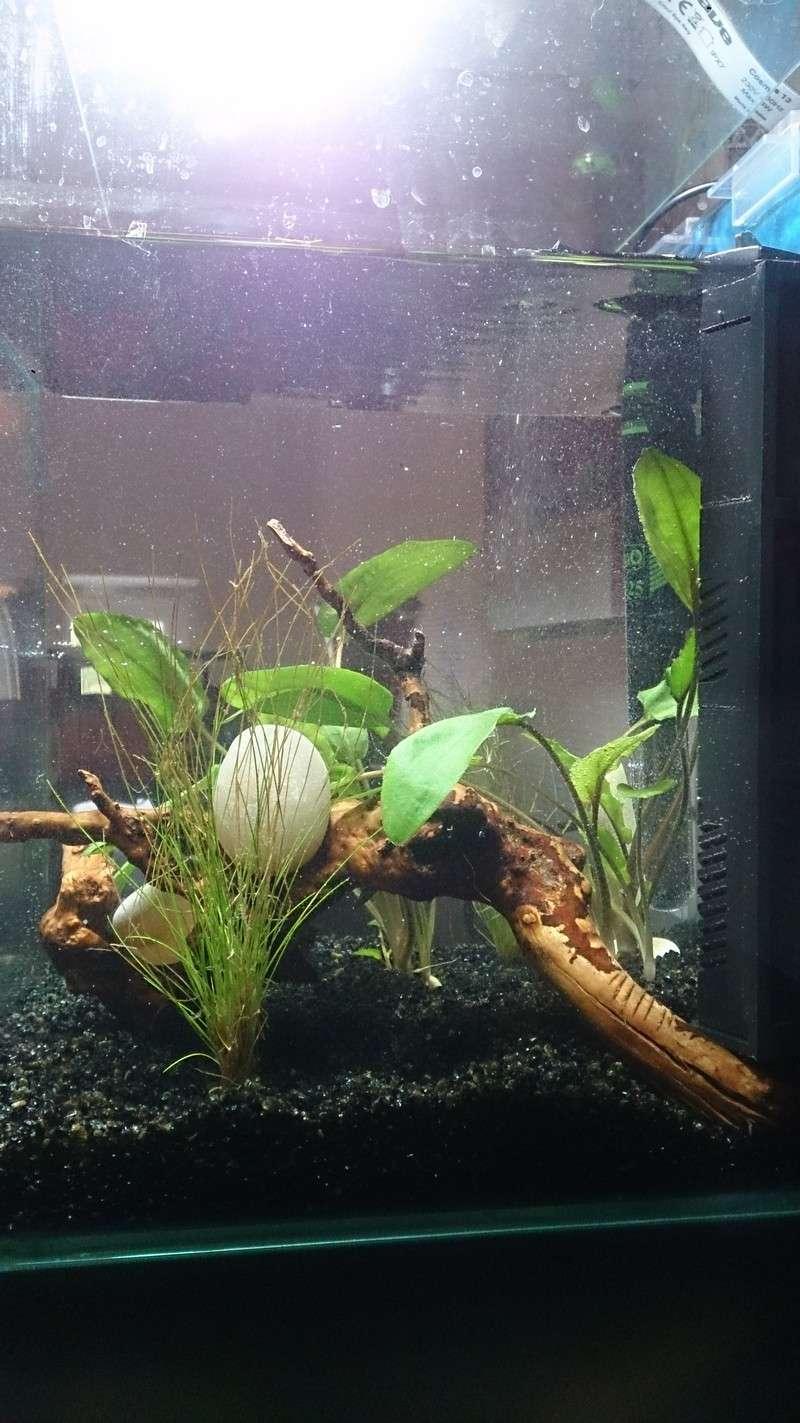 nouvel aquarium pour futur betta Dsc_0312