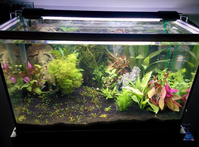 Aquarium 55L conseil  Img_2011