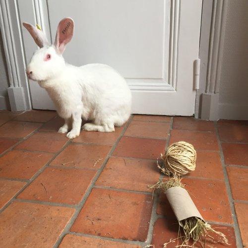 Association White Rabbit - Réhabilitation des lapins de laboratoire - Page 2 Alice_10
