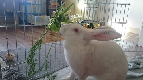 Association White Rabbit - Réhabilitation des lapins de laboratoire - Page 2 Aloe-p10