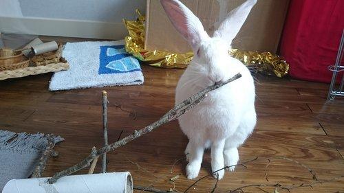 Association White Rabbit - Réhabilitation des lapins de laboratoire - Page 2 Aloe_p10