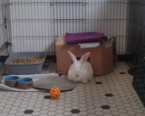 Association White Rabbit - Réhabilitation des lapins de laboratoire - Page 2 Alpha_10