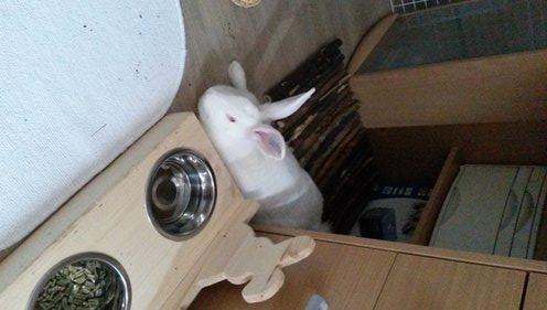 Association White Rabbit - Réhabilitation des lapins de laboratoire - Page 2 Apple_11