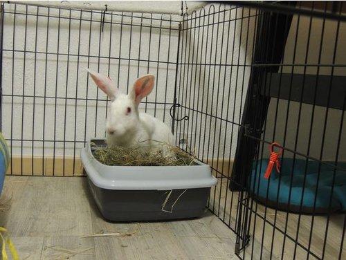Association White Rabbit - Réhabilitation des lapins de laboratoire - Page 2 Asae_p10