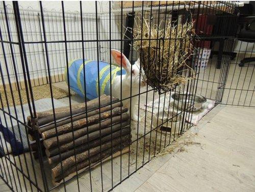 Association White Rabbit - Réhabilitation des lapins de laboratoire - Page 2 Asae_p11