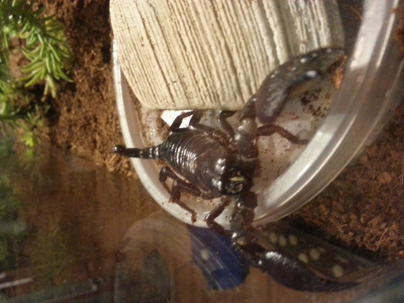 Please help identify my new scorpions. 20150711