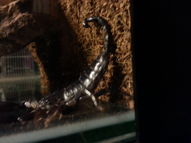 Please help identify my new scorpions. 20150712