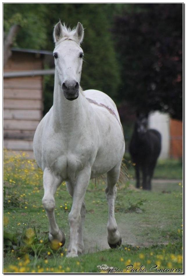 Alceste, hongre de 25 ans, adopté par Pacha ! Alcest13