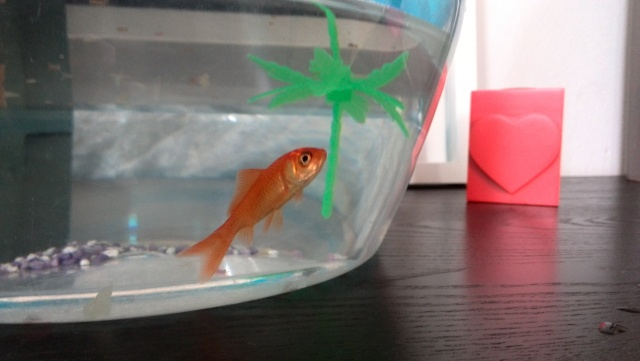 Besoin d'aide poisson rouge  Img_2010