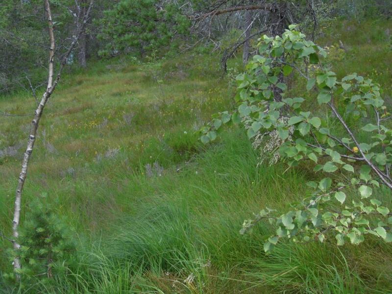 Quelques photos de mon voyage en Norvège P1000917