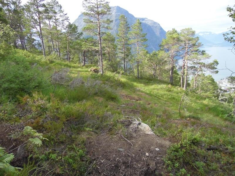 Quelques photos de mon voyage en Norvège P1000918