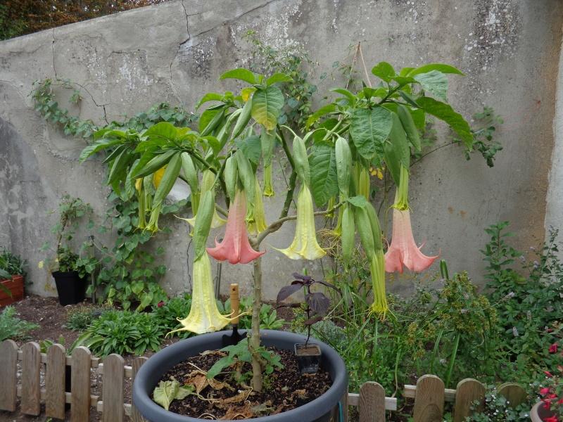 Mon ptit jardin à moi. Dsc00710