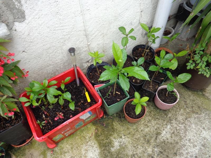 Mon ptit jardin à moi. Dsc00711