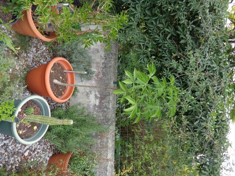 Mon ptit jardin à moi. Dsc00712