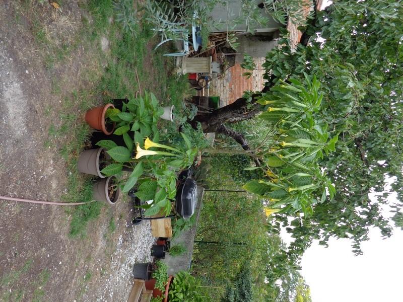 Mon ptit jardin à moi. Dsc00714